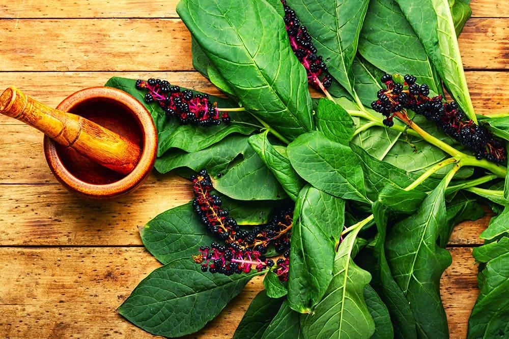 Giftmorde auf Pflanzenbasis - 15 tödliche Anleitungen